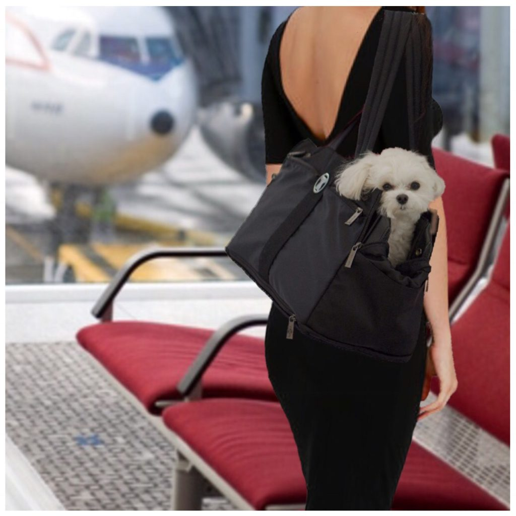 What Is An Airline Approved Pet Carrier Miso Pup